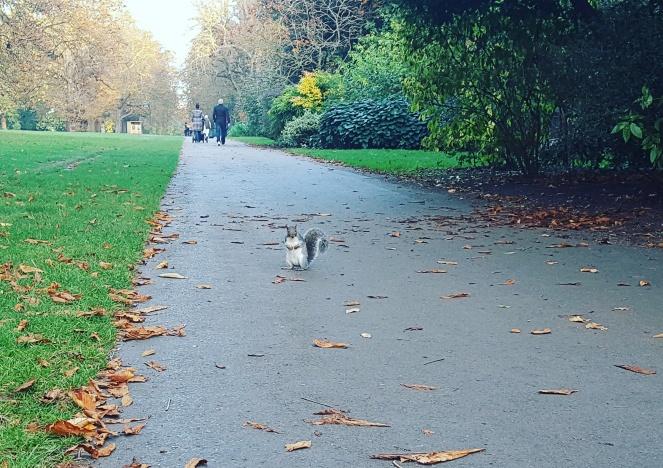ecureuil kensington gardens hyde park.jpg